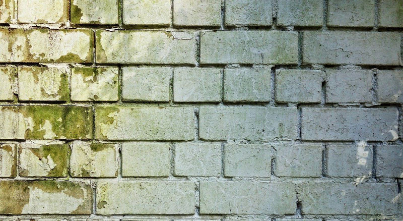 molds-on-the-brick-walls